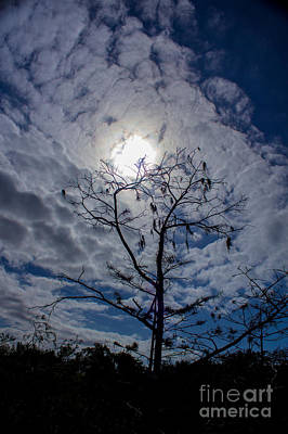 Photograph - Romancing The Sun by Rene Triay Photography