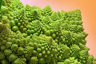Broccoli Wall Art - Photograph - Romanesque Broccoli by Steve Allen/science Photo Library
