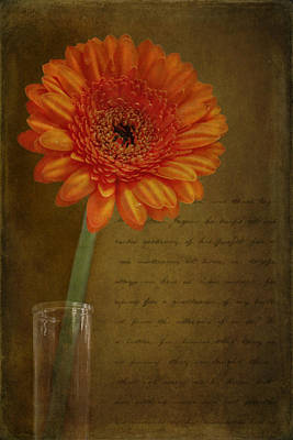 Photograph - Romantic Gerbera by Eduardo Tavares