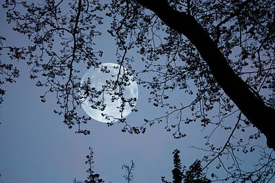 Photograph - Romantic Moon  by Angel Jesus De la Fuente