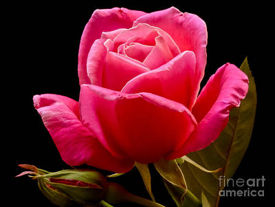Bloosom Photograph - Romantic by Nick  Boren