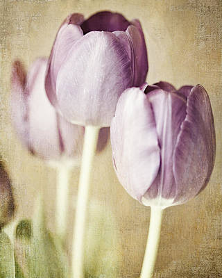 Natural Finish Photograph - Romantic Pastel Purple Tulips by Lisa Russo