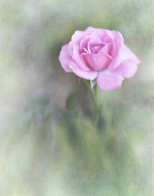 Photograph - Romantic Pink by David and Carol Kelly