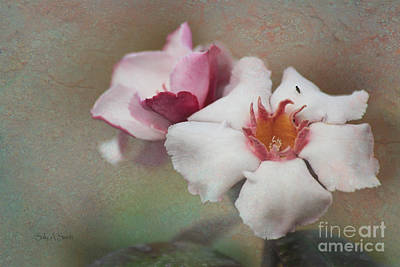 Photograph - Romantic Pink Flower With A Fly by Sally Simon