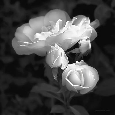 Photograph - Romantic Roses Black And White by Jennie Marie Schell