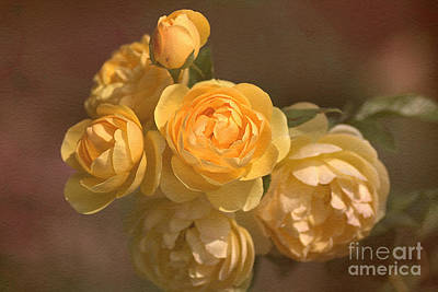 Photograph - Romantic Roses by Joy Watson