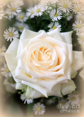 Communion Photograph - Romantic White Rose by Carol Groenen