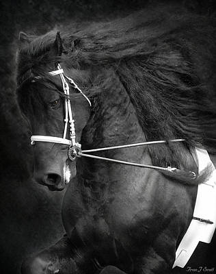 Friesian Digital Art - Romke 401 Long Line by Fran J Scott