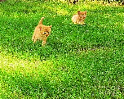 Photograph - Romping Kittens by Pet Serrano