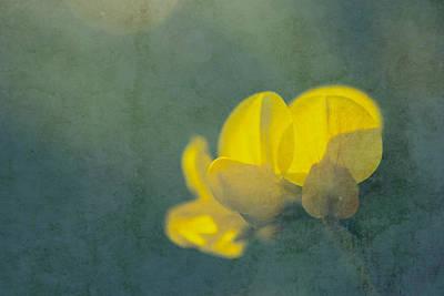Rondo Floral - S08at2 Art Print