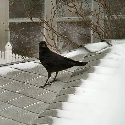 Roof Crow Art Print
