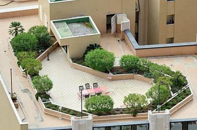 Rooftop Garden Art Print by Chris Hellier