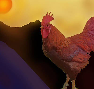 Photograph - Rooster At Sunset by Ian  MacDonald