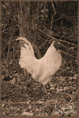 Photograph - Rooster In Sepia by Mark McReynolds