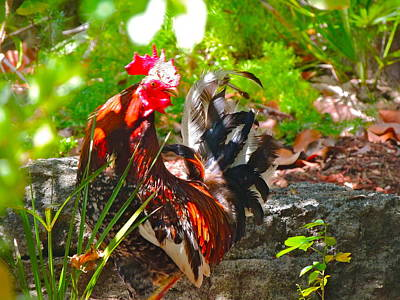Photograph - Rooster In The Bush by Kit Kat