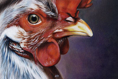 Drawing - Rooster by Natasha Denger