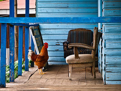 Rooster On Porch  Art Print by Robert Watcher