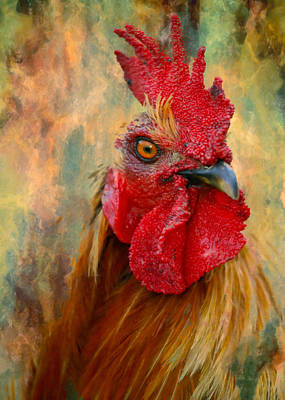 Home Decorating Mixed Media - Rooster On The Loose - Abstract Realism by Georgiana Romanovna