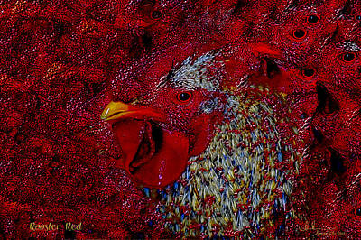Photograph - Rooster Red by Amanda Smith