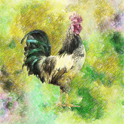 Vivid Drawing - Rooster by Taylan Apukovska