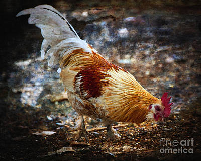 Photograph - Roosters Got His Eye On You by Lee Craig