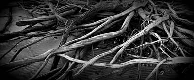 Photograph - Root Coverd Beach Bw by Sheri McLeroy