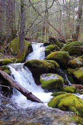 Creek Photograph - Root Creek 7 by Joshua Greeson