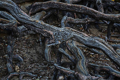 Photograph - Root by Randal Bruck