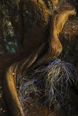 Photograph - Tree Root by Yulia Kazansky