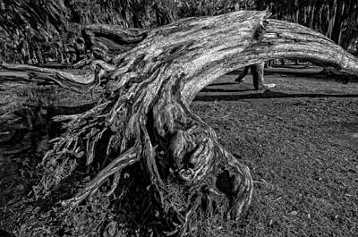 Photograph - Rooted by Andy Crawford