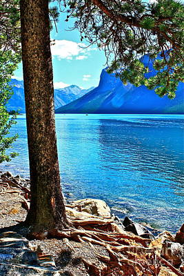 Art Print featuring the photograph Rooted In Lake Minnewanka by Linda Bianic
