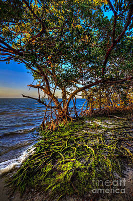Seaweed Photograph - Rooted In Truth by Marvin Spates