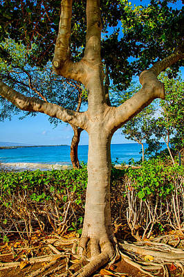 Photograph - Rooted Tropical Tree by Omaste Witkowski