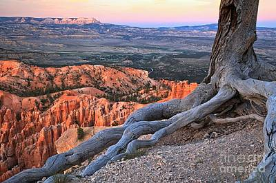Photograph - Roots Above The Hoodoos by Adam Jewell