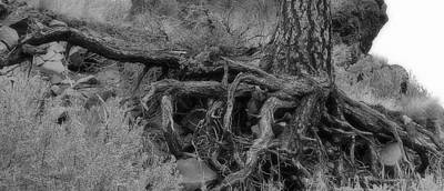 Photograph - Roots by AJ  Schibig