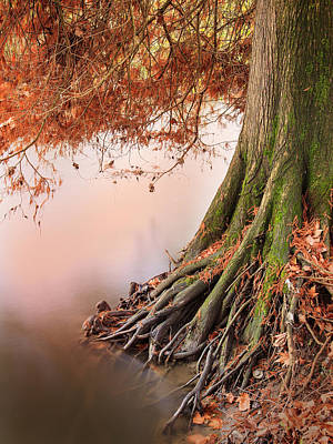 Photograph - Roots by Alfio Finocchiaro