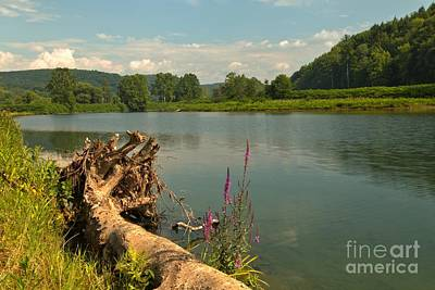 Photograph - Roots And Flowers By The Lake by Adam Jewell