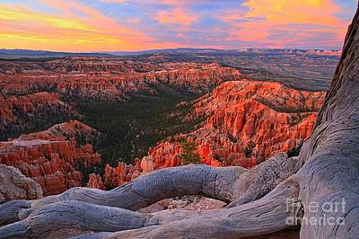 Photograph - Roots And Hoodoos by Adam Jewell