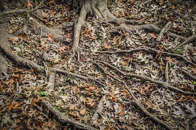 Photograph - Roots by Bradley Clay