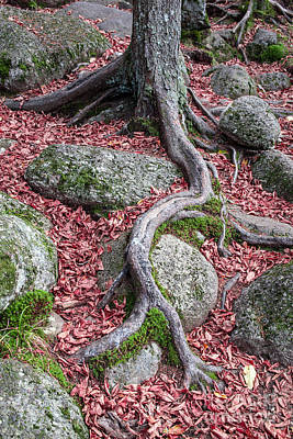 Tree Root Photograph - Roots by Edward Fielding