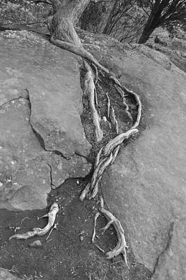 Wall Art - Photograph - Roots I by Bill Mock