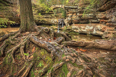 Photograph - Roots by Jaki Miller