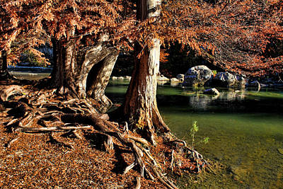 Photograph - Roots by Judy Vincent