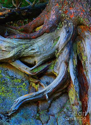 Photograph - Roots  by Lilianna Sokolowska