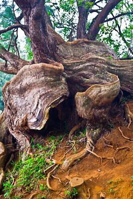 Photograph - Roots by Matt Radcliffe