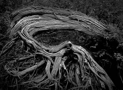 Roots Of A Fallen Tree By Wawa Ontario In Black And White Art Print by Randall Nyhof