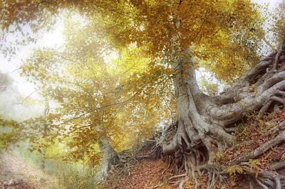 Photograph - Roots Of The Buffalo - Autumn - Arkansas - Beech Trees by Jason Politte