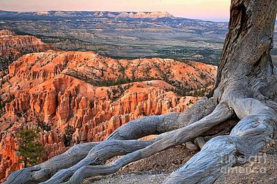 Photograph - Roots Of The Canyon by Adam Jewell