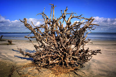 Jekyll Island Photograph - Roots On Jekyll Island by Chrystal Mimbs