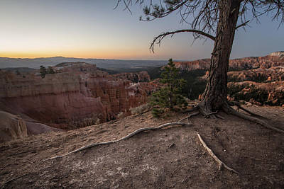 Photograph - Roots On The Rim 1 by Dwight Theall